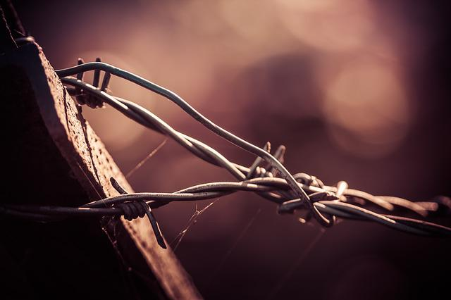 Nature, No Person, Barbed Wire, Wood
