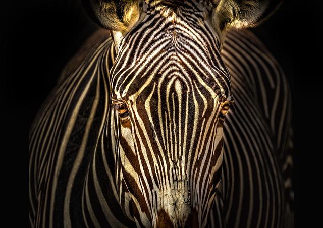 Nature, Fauna, No Person, Zebra, Animal