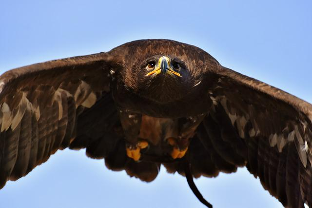 Adler, Raptor, Bird Of Prey, Animal, Fly, Noble, Prey