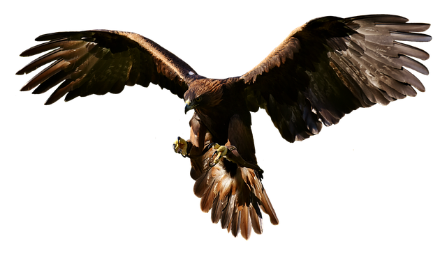 Adler, Raptor, Bird Of Prey, Animal, Fly, Noble, Flight