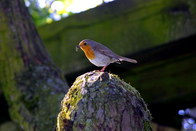 Robin, Bird, Worm, North Park, Düsseldorf