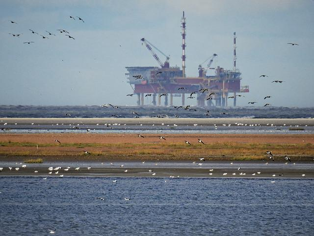 Lake, Sea, North Sea, Oil Rig, Birds, Gulls, Water
