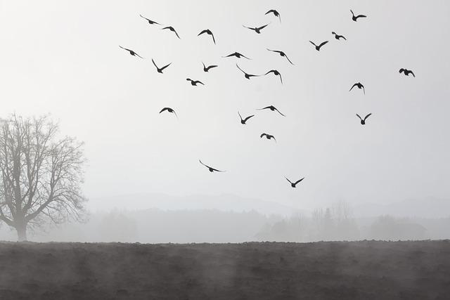 Fog, Mood, Landscape, Fog Bank, Fog Day, November