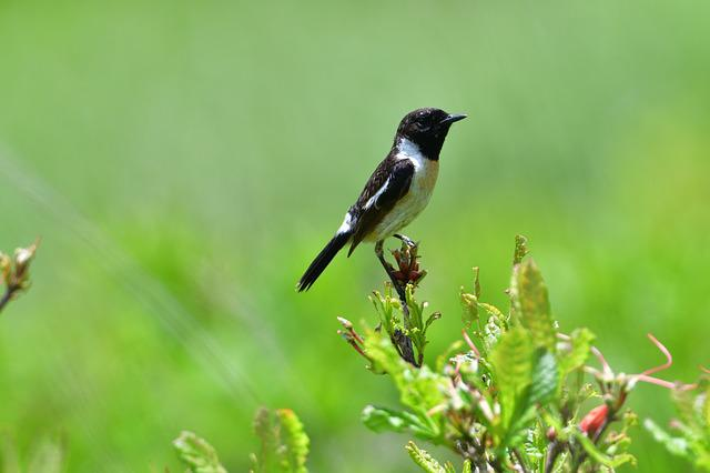 Natural, Wild Animals, Bird, Animal, Novi Security