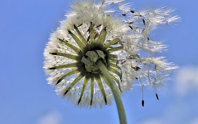 Biel, Nuns, Flying Seeds, Fluff, Wind, Blue, Sky
