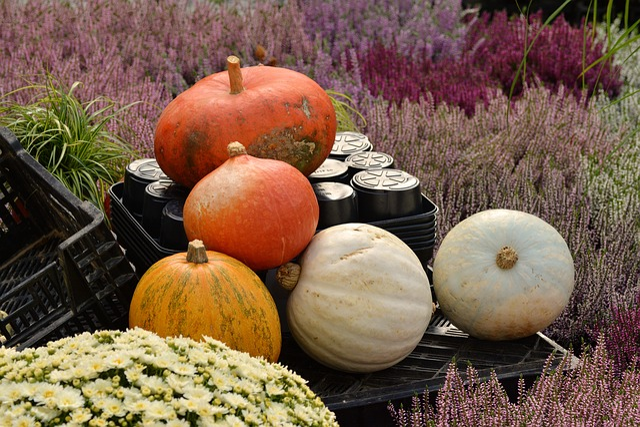 Nursery, Autumn Plant, Pumpkins, Heide, Autumn, Offer