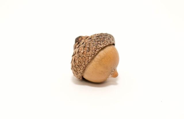 Nature, Acorn, Nut, Fall, Squirrel