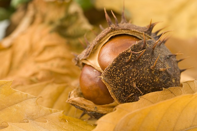 Conker, Tree, Seasonal, Season, Plant, Object, Nut