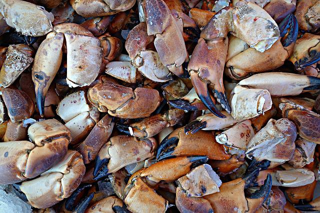 Crab, Seafood, Claws, Food, Market, Nutrition, Eating