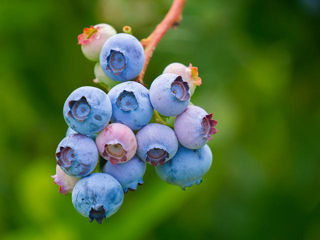 Blueberries, Fruit, Growth, Vitamins, Nutrition