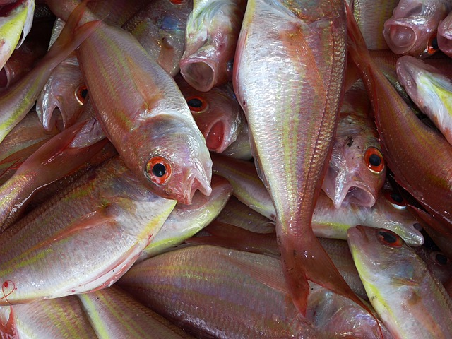 Fish, Fischer, Ocean, Market, Food, Sell, Nutritious