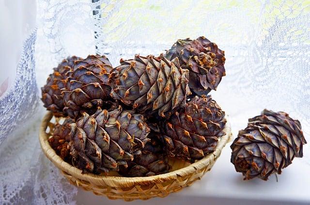 Cones, Cedar, Nuts, Autumn