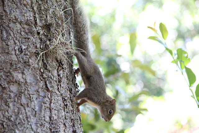 Squirrel, Nuts, Nature, Animal, Animal World, Mammal