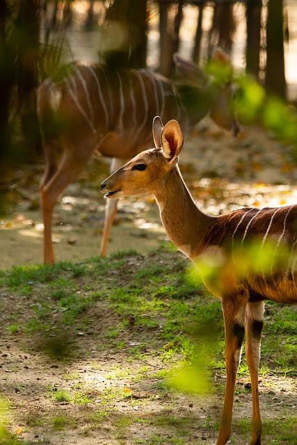 Nyala, Forest, Scene, Natural World, Animal, Local