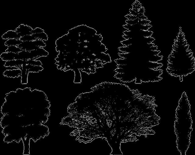 Forest, Trees, Oak, Fir, Pine, Spruce, Maple, Christmas