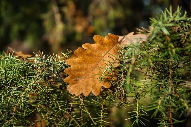 Dead Leaf, Rosemary, Oak, Vegetation