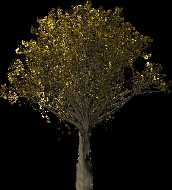 Tree, Oak, Oak Tree, Quercus, Fall Leaves, Fall Colors