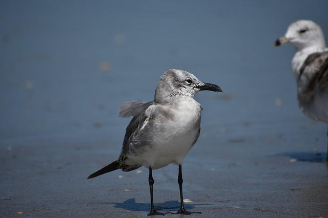 Birds, Seagull, Animal, Ocean, Seabird, Beach