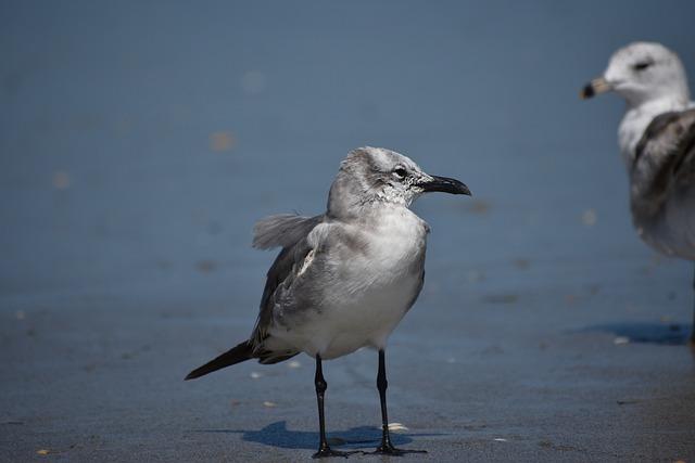 Birds, Seagull, Animal, Ocean, Seabird, Beach