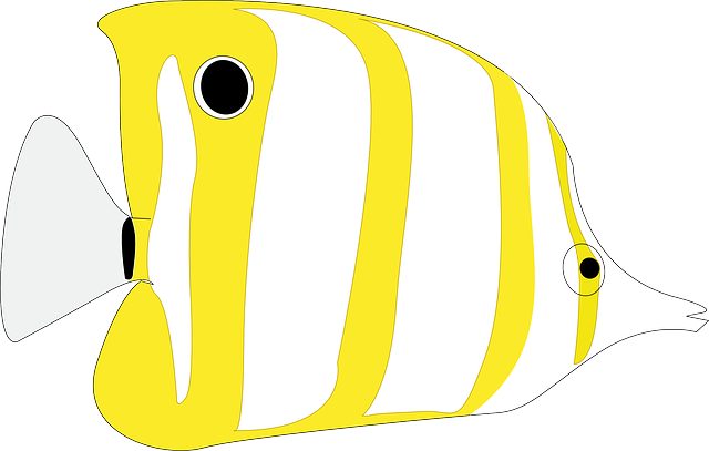 Fish, Butterflyfish, Animal, See, Ocean, Swimming