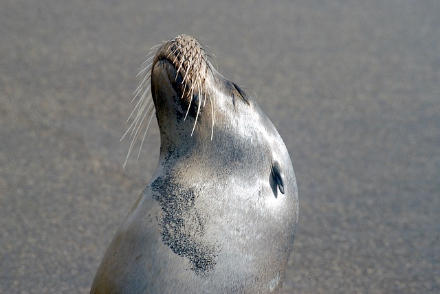 Galapagos, Sea Lion, Marine, Sea, Lion, Ocean, Animal