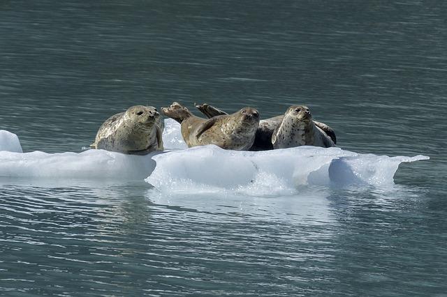 Seal, Mammal, Animal, Wildlife, Nature, Marine, Ocean