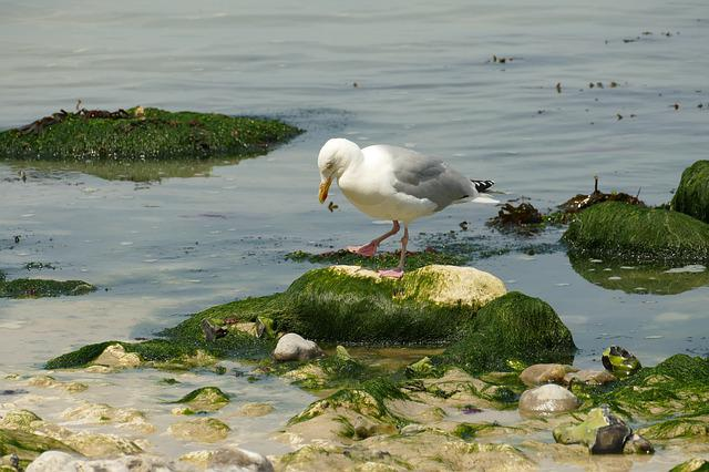 Seagull, Bird, Waterfowl, Fauna, Sea, Ocean, Rock