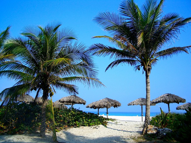 Sea, Ocean, Water, Palms, Palm Trees, Sky, Clouds