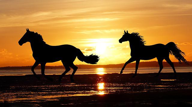 Sunset, Horses, Wild, Nature, Silhouette, Ocean, Beach