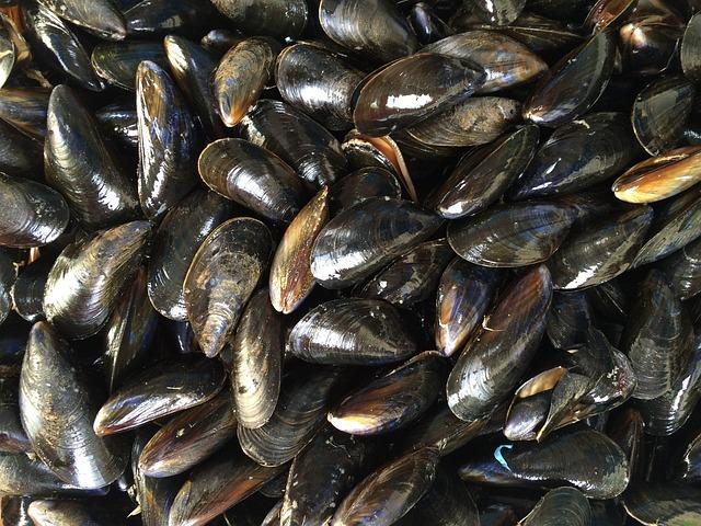 Mussels, Shellfish, Black, Seafood, Mollusk, Sea, Ocean