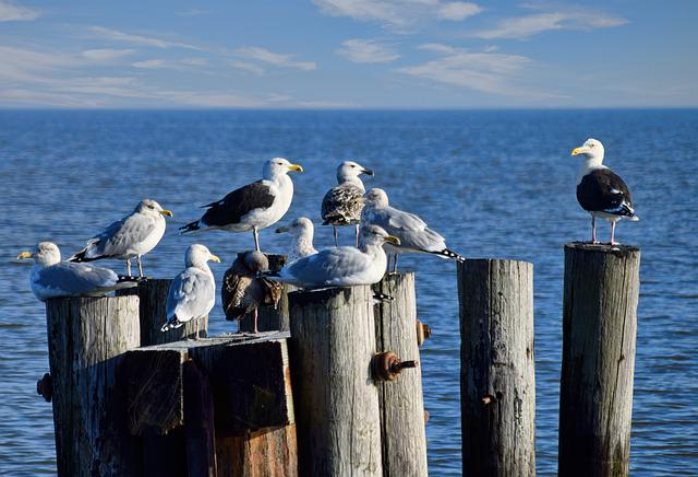 Seagulls, Piles, Wood, Bay, Ocean, Pier, Bird, Port