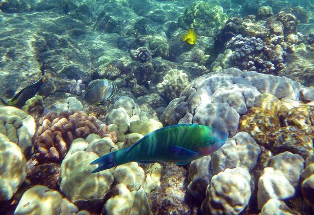 Rainbow Fish, Ocean, Sea, Fish, Rainbow, Marine