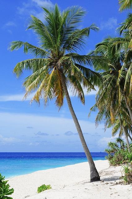 Beach, Palm Trees, Sea, Ocean, Seascape, Horizon