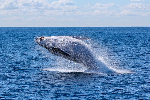 Fish, Nature, Ocean, Sea, Sky, Swimming, Water, Whale