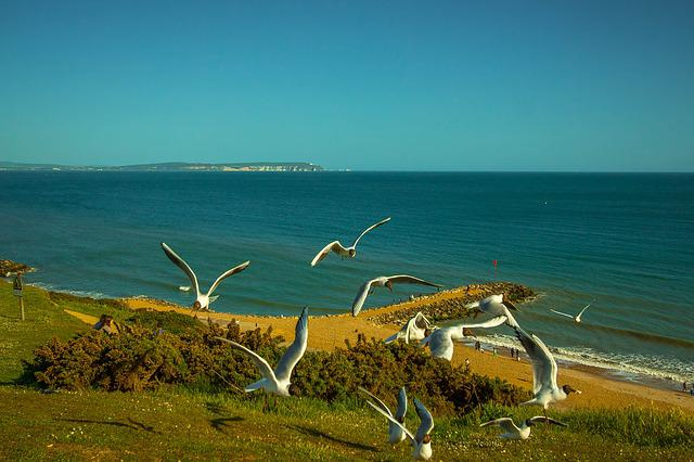 Ocean, Seagull, United States Of America, Highcliffe