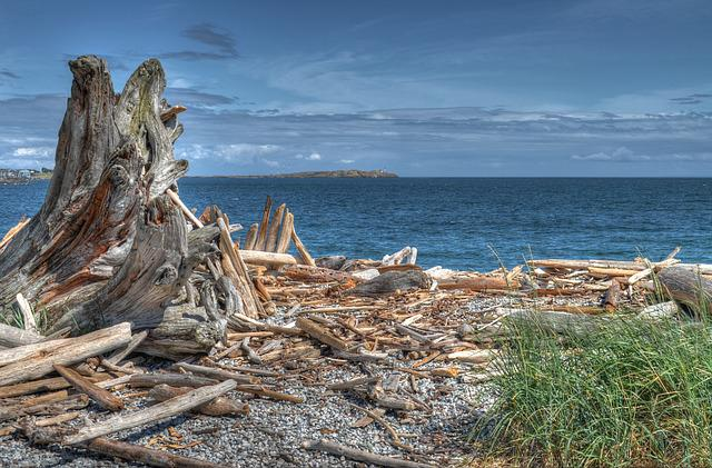 Wood, Sea, Landscape, Driftwood, Ocean, Holiday, Water
