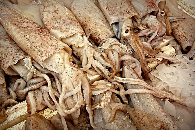 Squid, Animal, Cephalopod Mollusc, Octopoda, Octopus