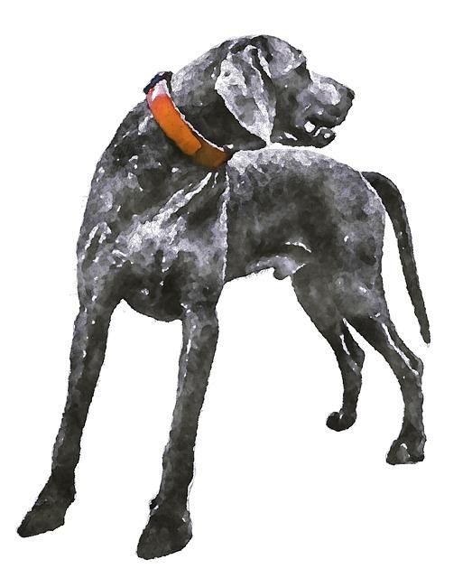 Weimaraner, Dogs, Dog, Animal, Watercolor, Oekaki