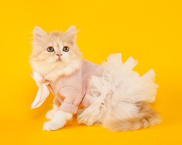 Marie, Cat, Cute, Of Fluff