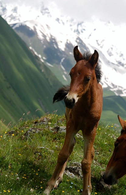 Georgia, Caucasus, Offspring, The Horse, Animal, Nature