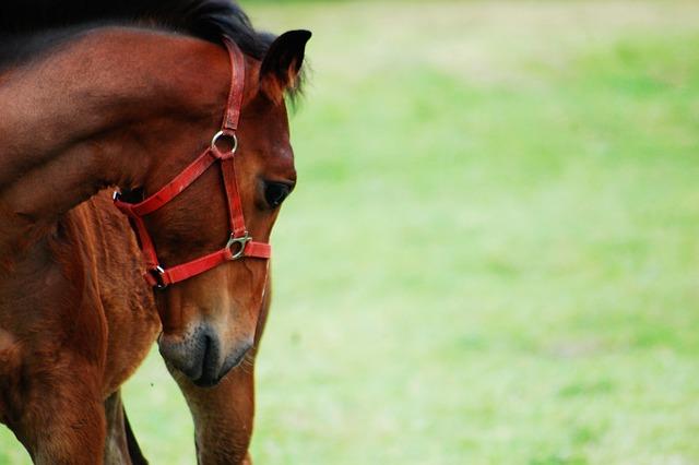 Offspring, Konik, Mammal, Nature, Animal, The Horse