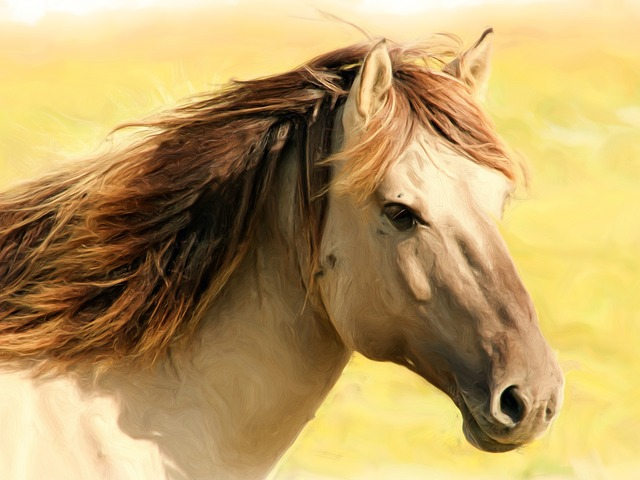 Painting, Oil Painting, Photo Painting, Horse