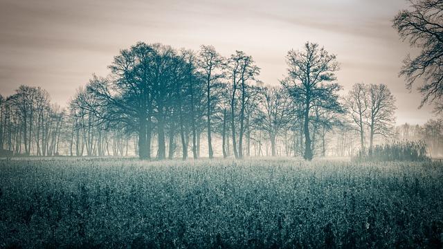 Autumn, Sunrise, Fog, Field Of Rapeseeds, Oilseed Rape