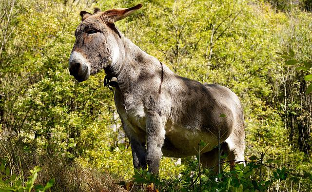 Donkey, Grey, Animal, Creature, Beast Of Burden, Old