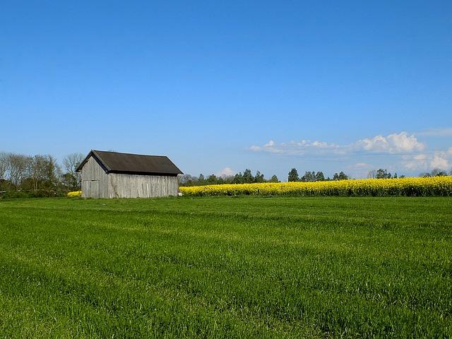 Hut, Nature, Oilseed Rape, Meadow, Barn, Landscape, Old