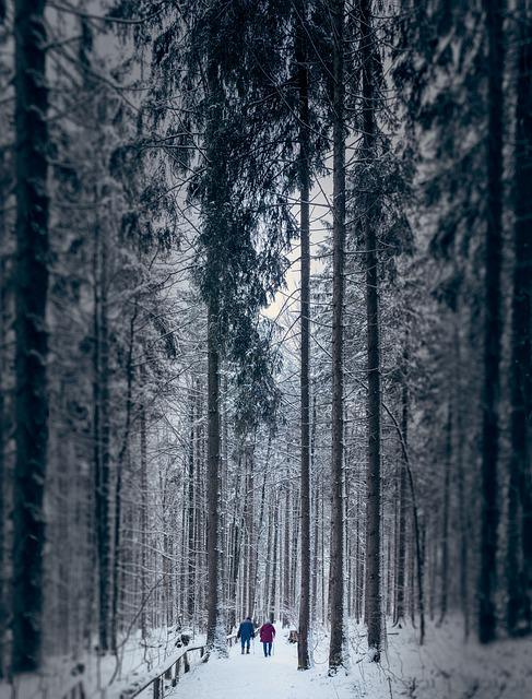 Winter, Pair, Couple, Old Pair Of, Age, Path, Forest