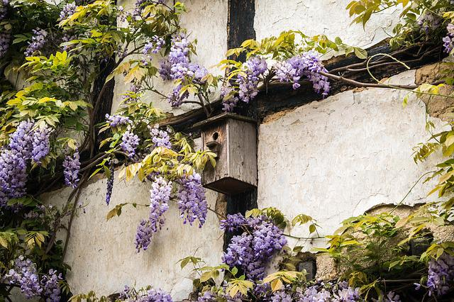 Aviary, Truss, Wisteria, Home, Wall, Fachwerkhaus, Old