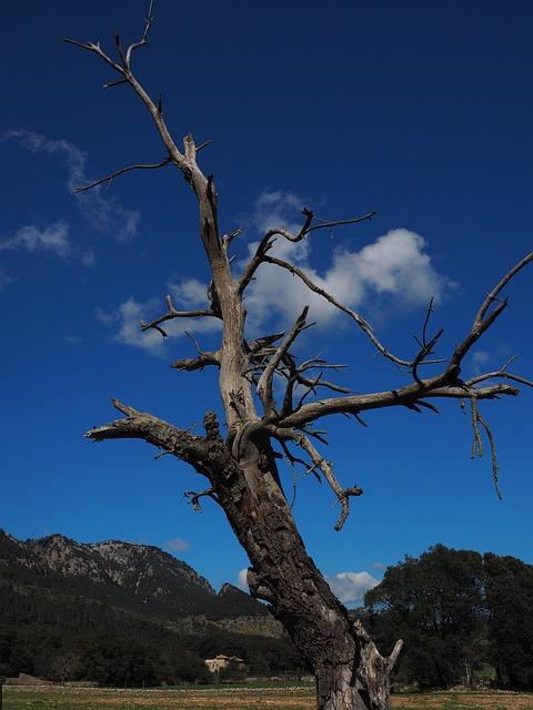 Tree, Old, Dead Plant, Wood, Dead, Log, Dead Tree, Dry