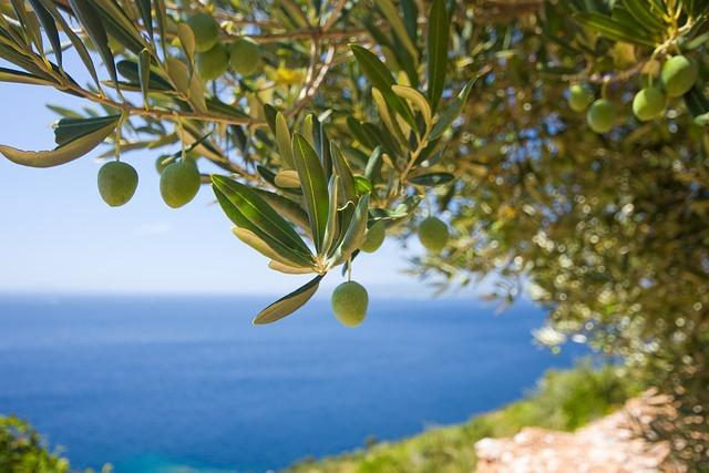 Tree, Olive, The Olives