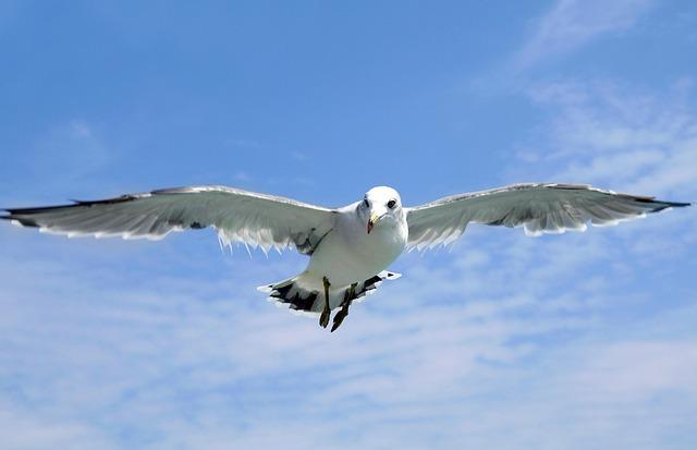 Seagull, Jeju Island, Udo, Olle Gill, Sea, Sky, Jeju
